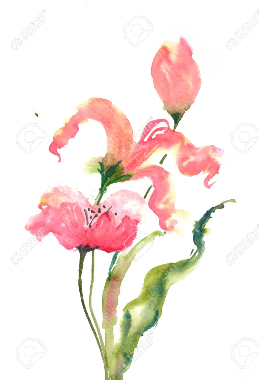 Beautiful tulip and poppy flowers on white background watercolor beautiful tulip and poppy flowers on white background watercolor hand draw on paper stock photo mightylinksfo
