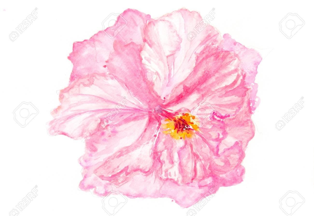 Pink hibiscus flower on white floral art watercolor painting pink hibiscus flower on white floral art watercolor painting home decorate stock photo izmirmasajfo