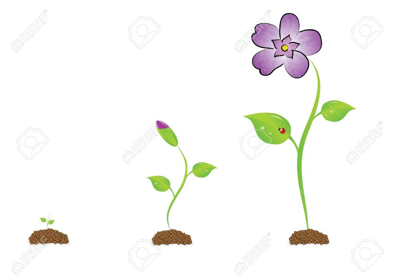 The isolated sprout with a violet. Stock Photo - 3610814