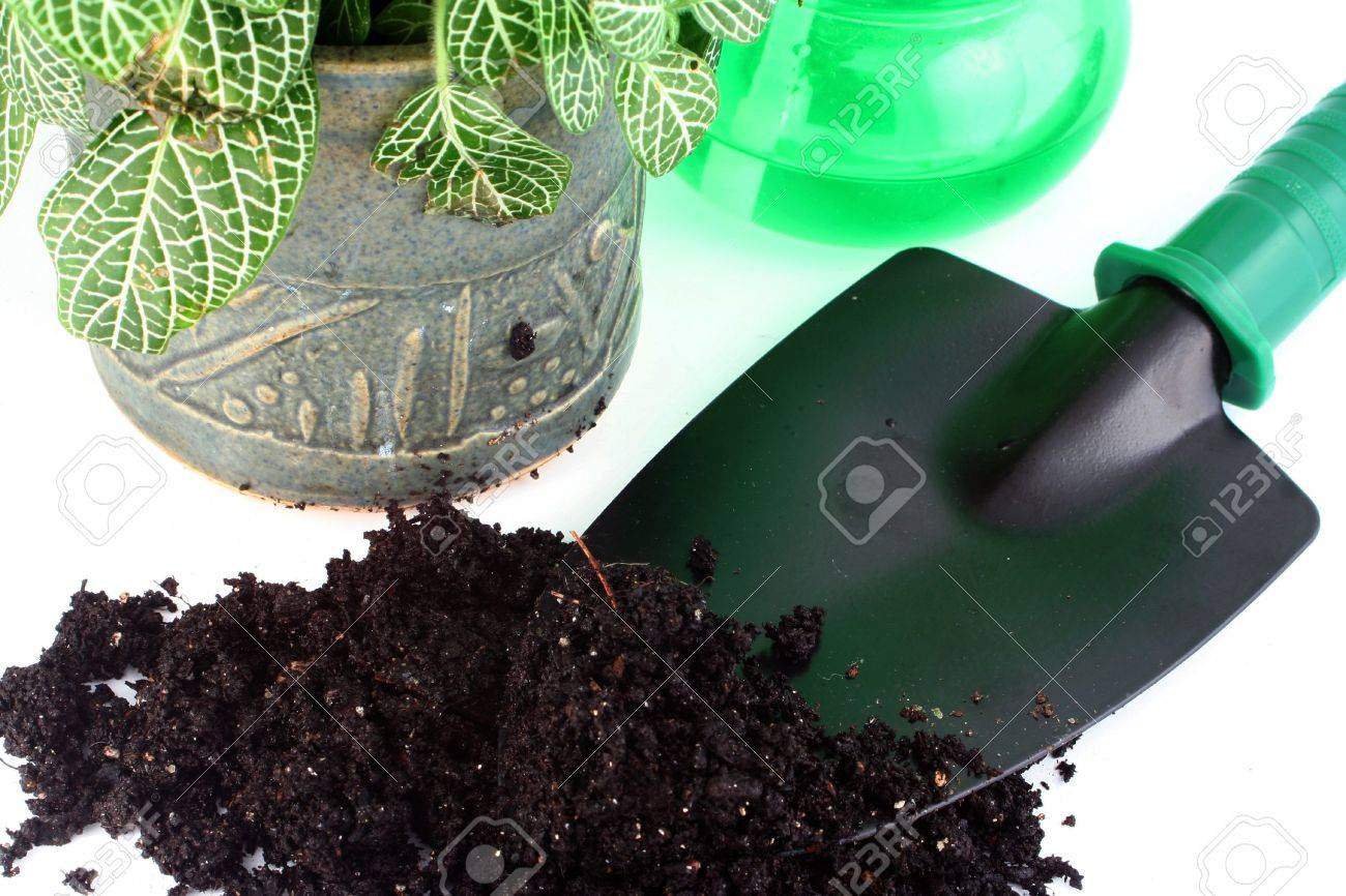 tools for gardening, plant, and dirt Stock Photo - 417651