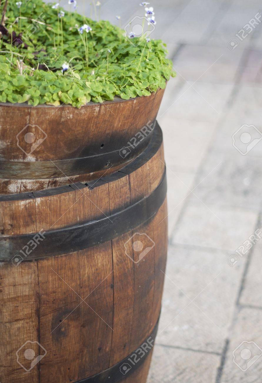 Green plants in wooden barrel, urban decorating