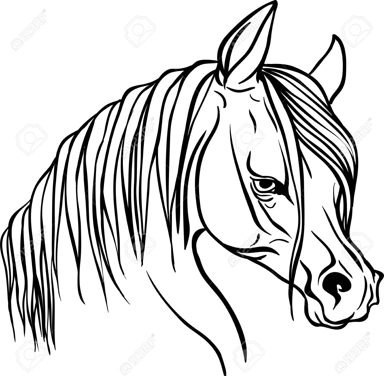 Horse Head For Coloring Book. Royalty Free Cliparts, Vectors, And ...