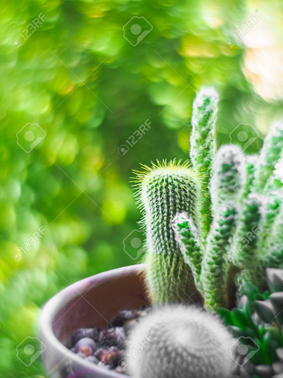 Pot cactus, swirly bokeh the Helios lens. Artistic swirly bokeh made with vintage lens helios-44-2. Houseplants. Selective focus - 171871052