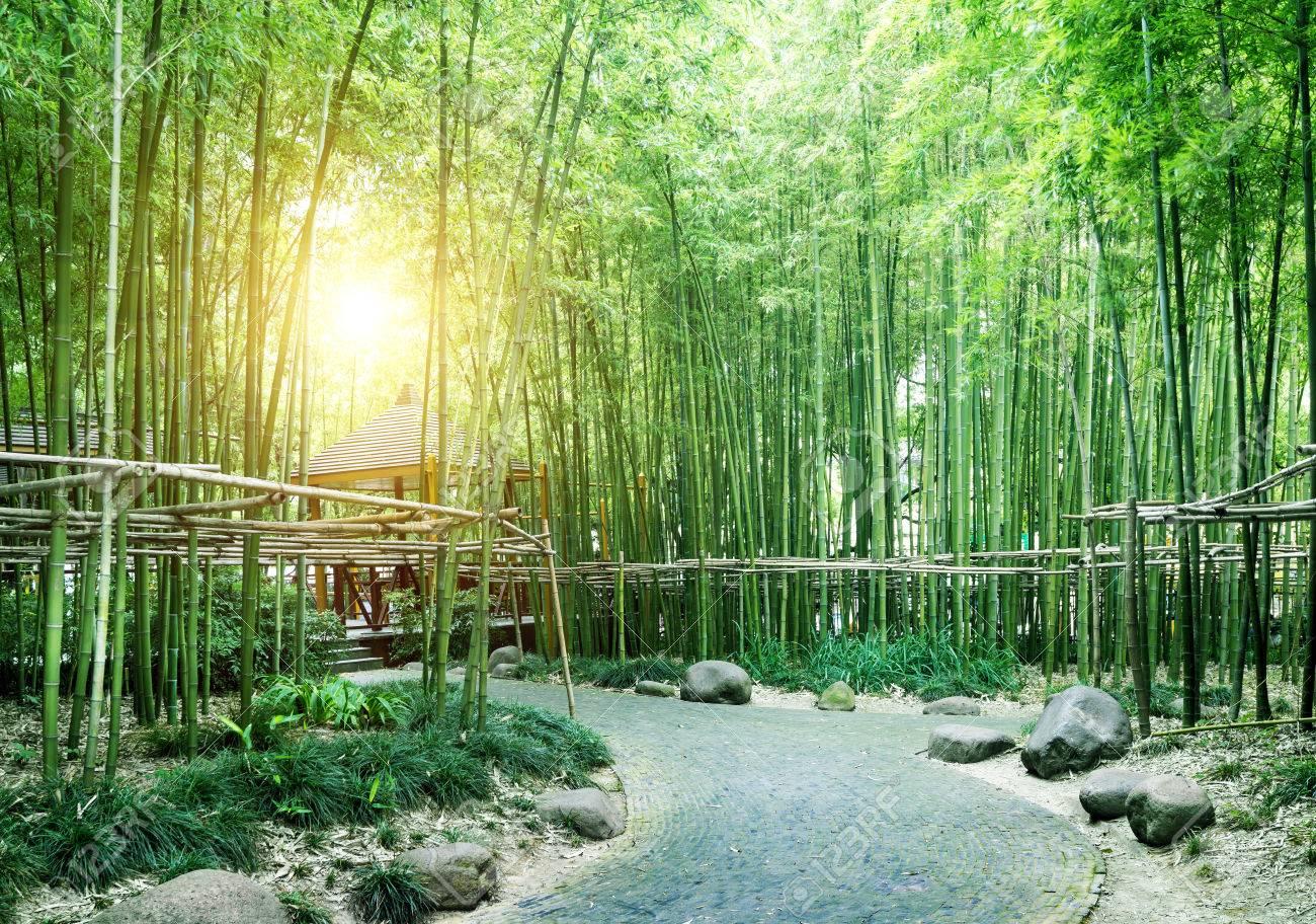 China's bamboo, grows in southern China. - 36092367