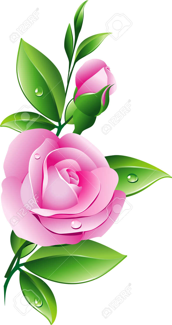 Pink rose Stock Vector - 6436240