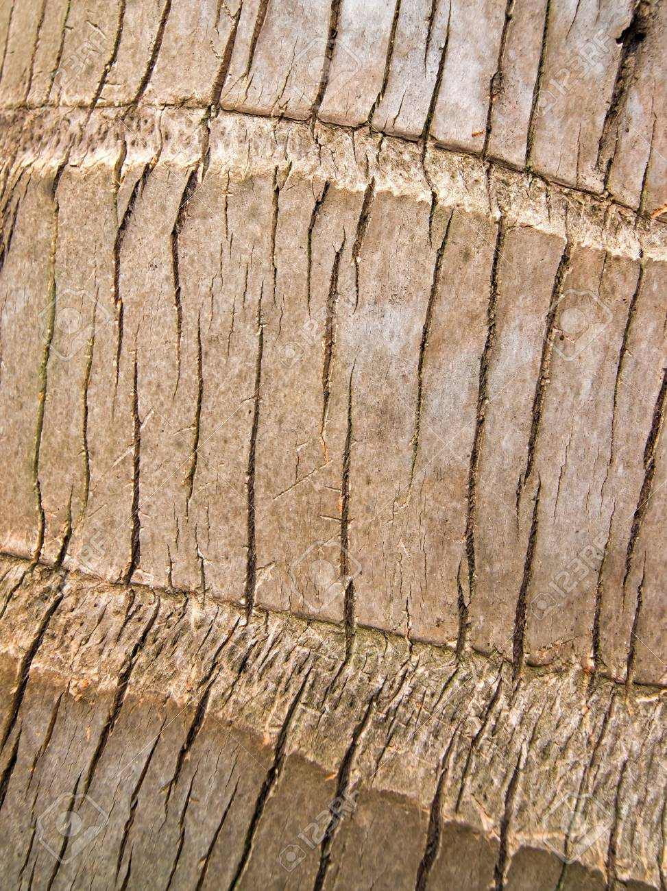 Surface of the tree Stock Photo - 10563099
