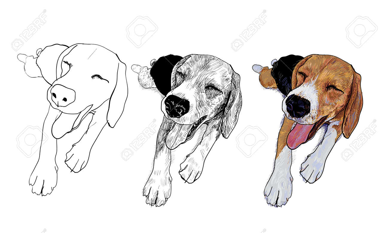 Beagle is resting and her face is smiling Stock Vector - 17736506