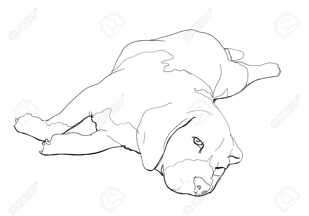 Beagle is laying down and almost fallen asleep Stock Vector - 18285998