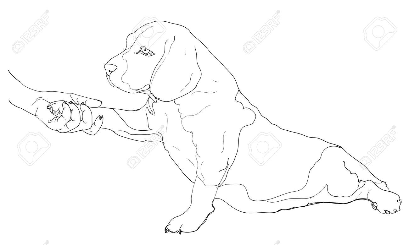 Human hand holding beagle s paw Stock Vector - 18291543