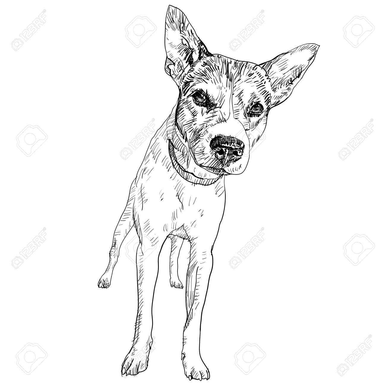 The local thai dog in perspective view Stock Vector - 18422617