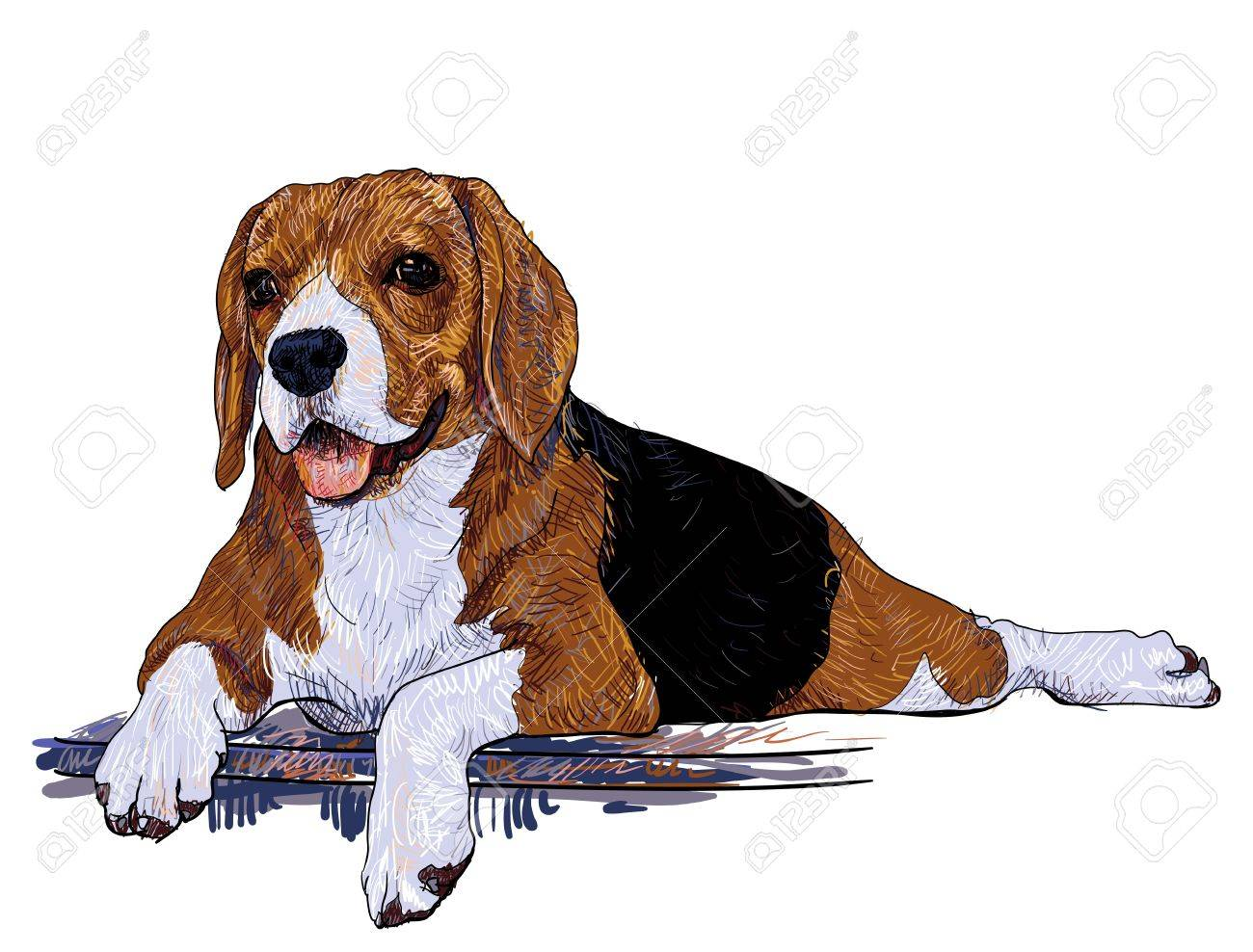 Beagle is laying down on step floor Stock Vector - 19726892