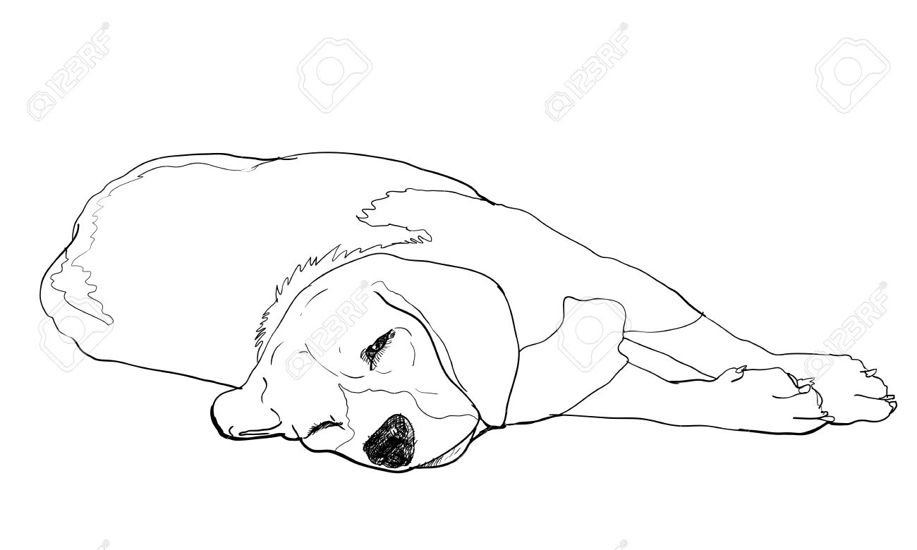 Photo Beagle Is Laying Down And Almost Fallen Asleep Jpg 1300x780 Dogs  Laying Down Drawings How
