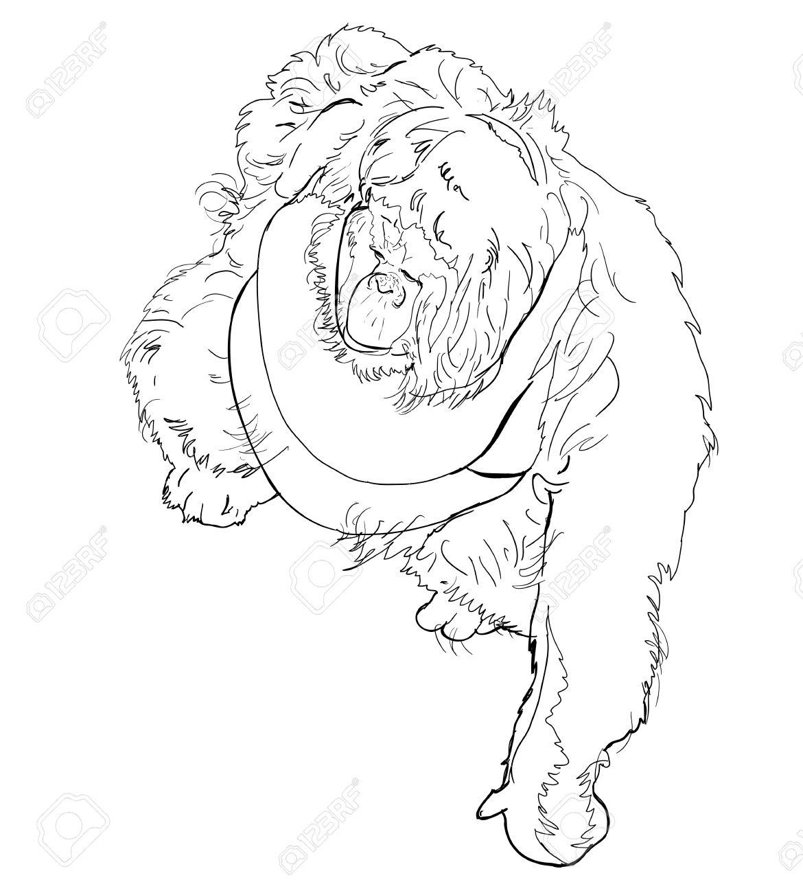 Uncategorized Orangutan Drawing the vector drawing style of orangutan royalty free cliparts stock 19708757