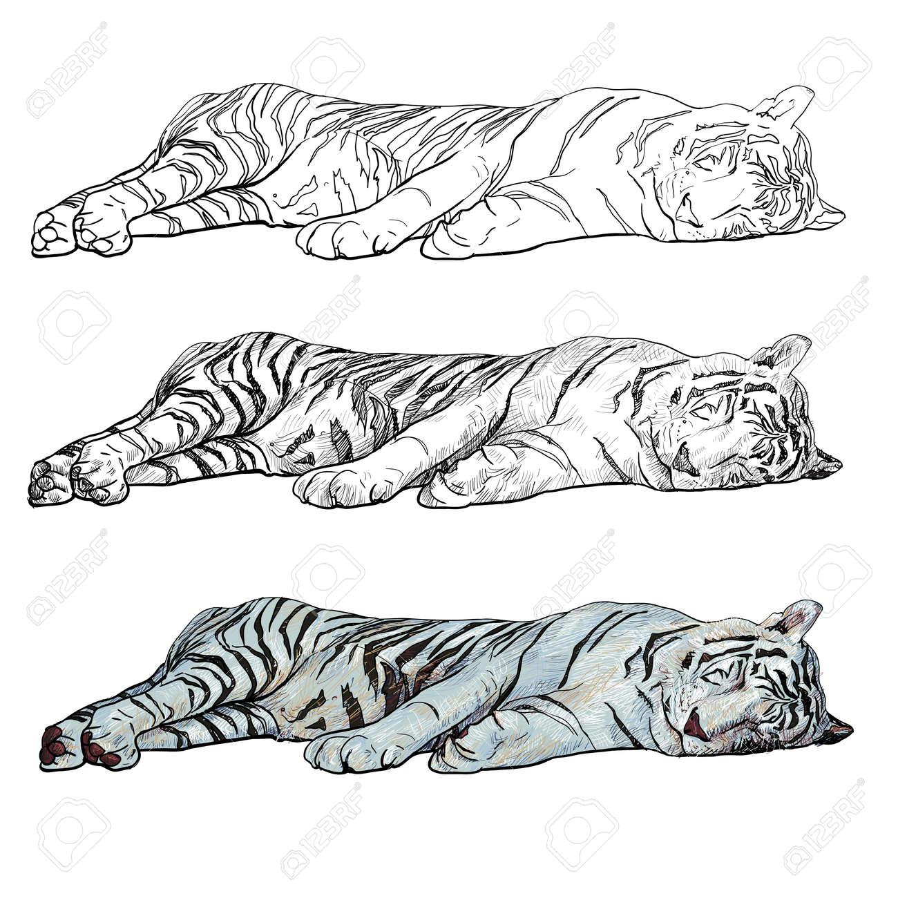 sleeping white tiger Stock Vector - 19869675