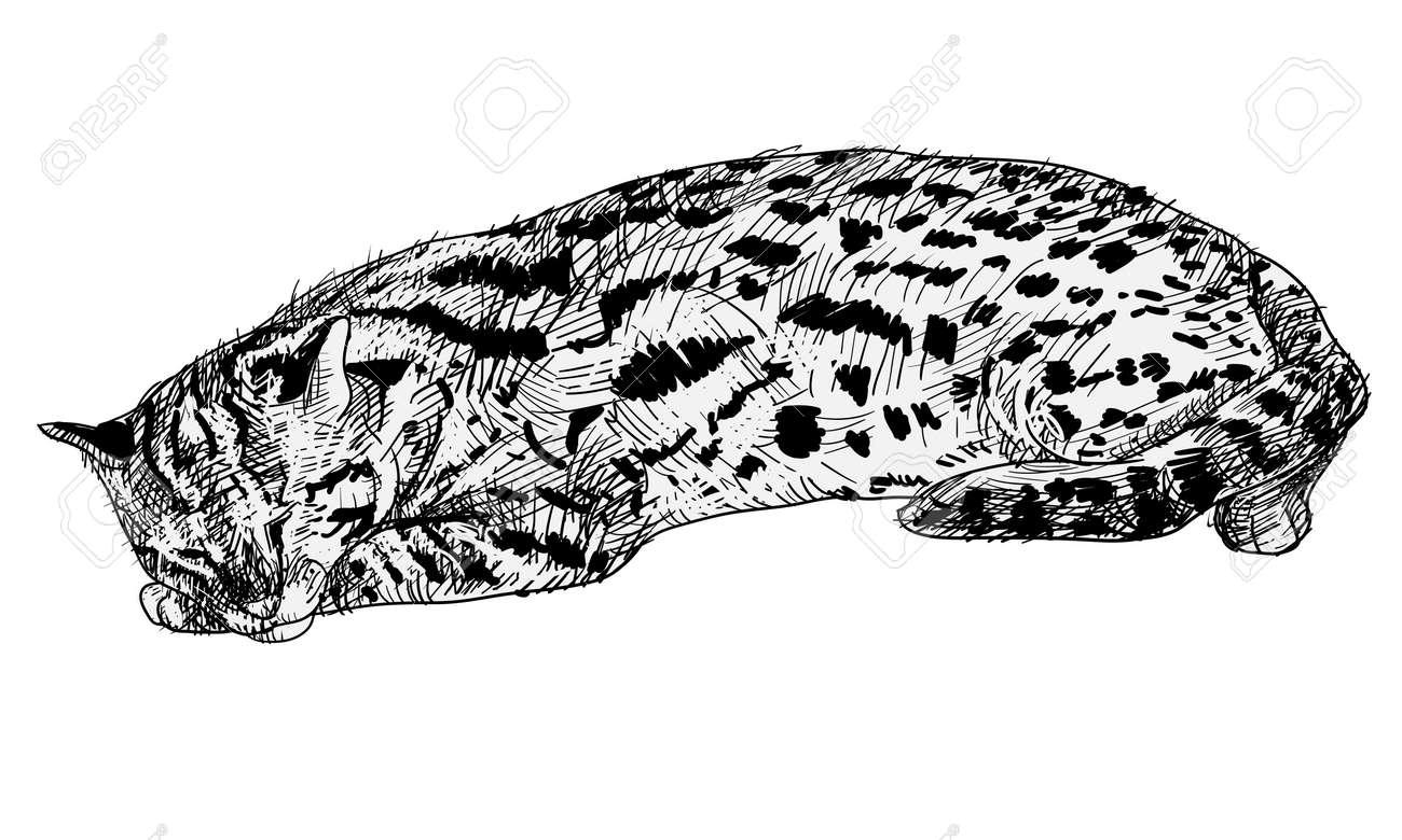 Vector of resting leopard cat Stock Vector - 22038055