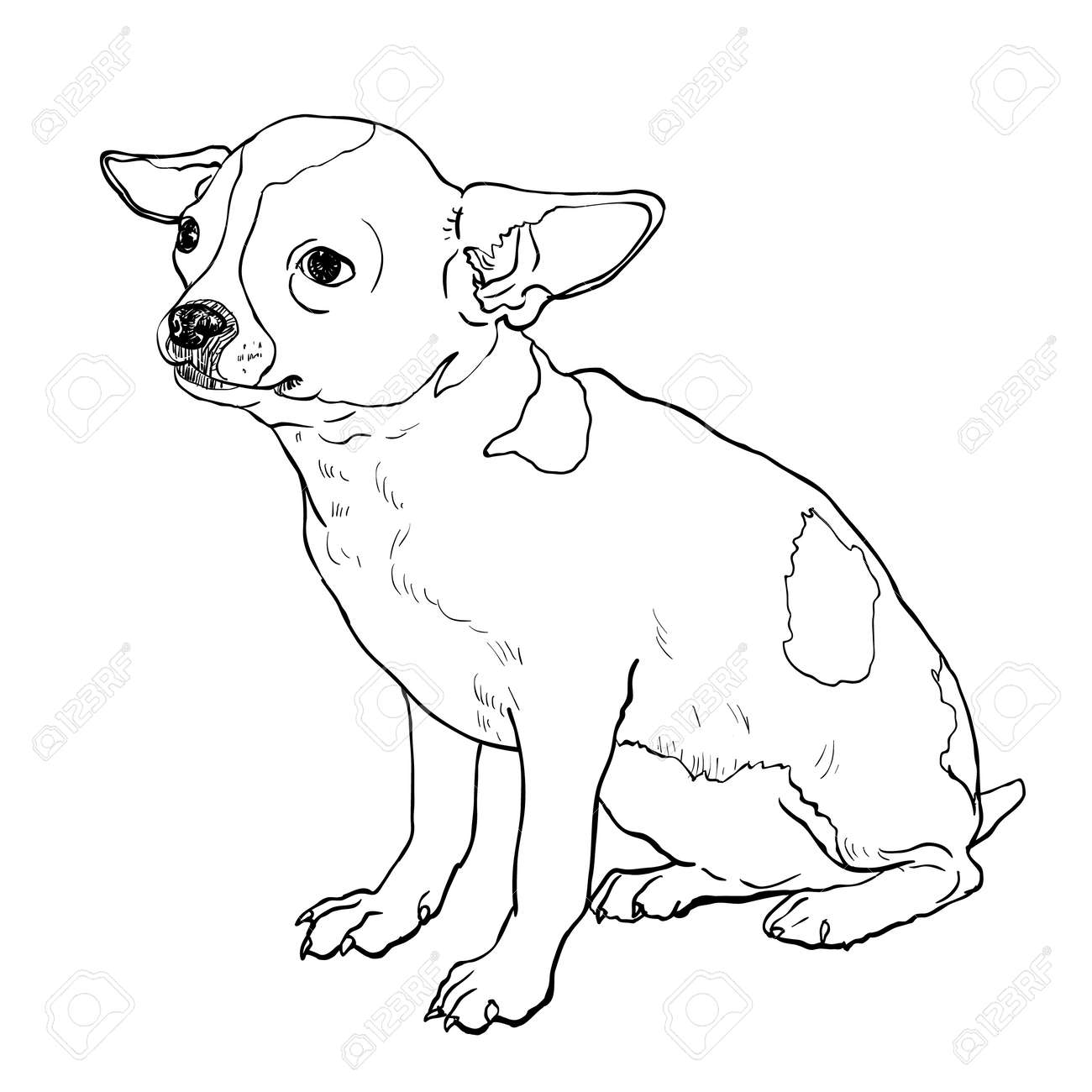 Coloriage Chihuahua. Find This Pin And More On Try It Now Chihuahua ...
