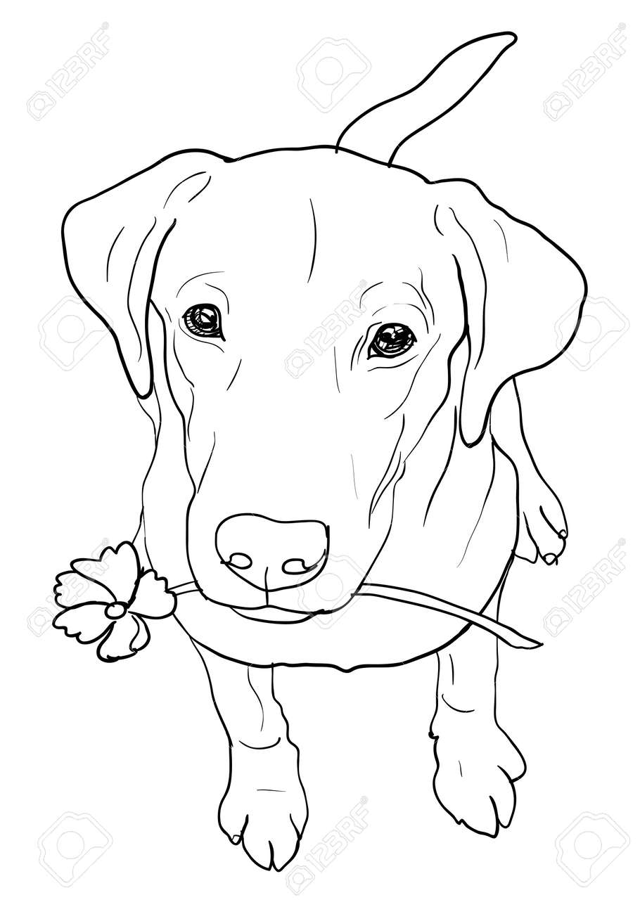 Dog grooming Puppy Cat Pet, White dog, adult yellow Labrador retriever,  white, animals png   PNGEgg