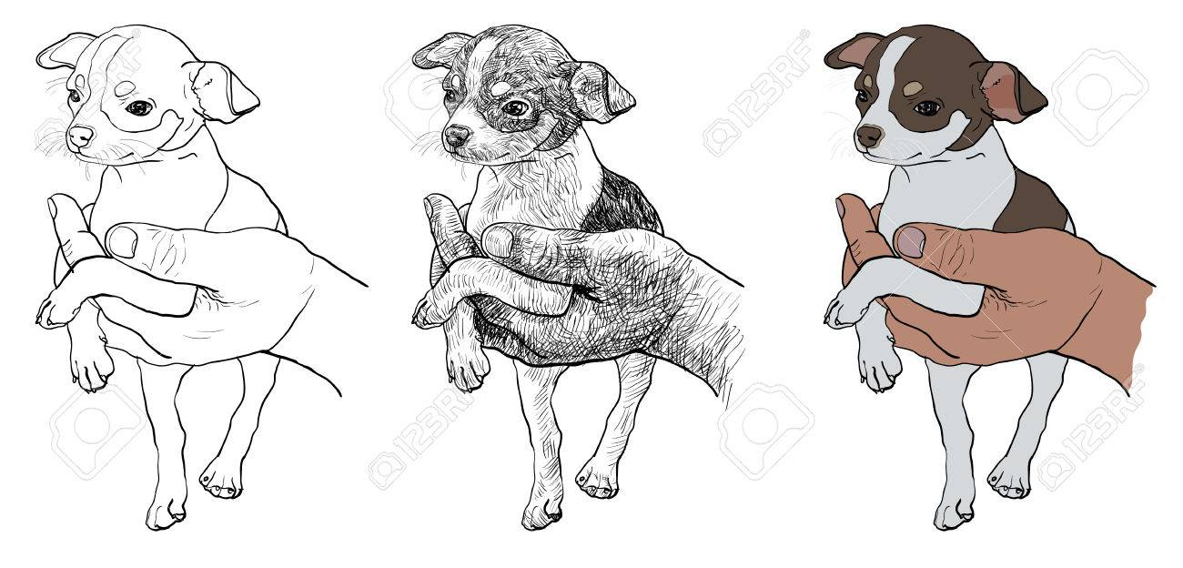 The drawing of chihuahua in human hand - 24716581