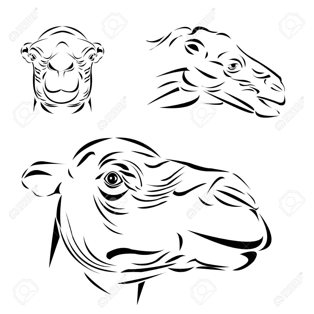 Line art of camel head on white background