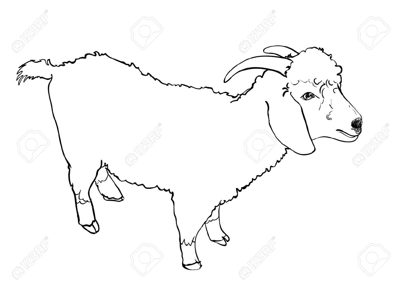 Sketch vector of angora goat on white background