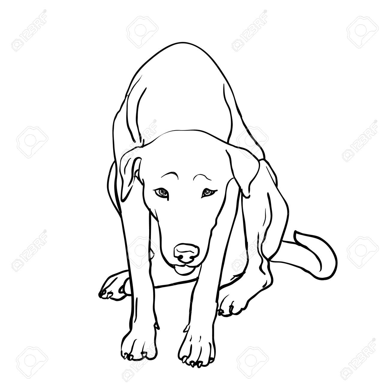 Drawing of sad stray dog sitting on white background stock vector 61865686