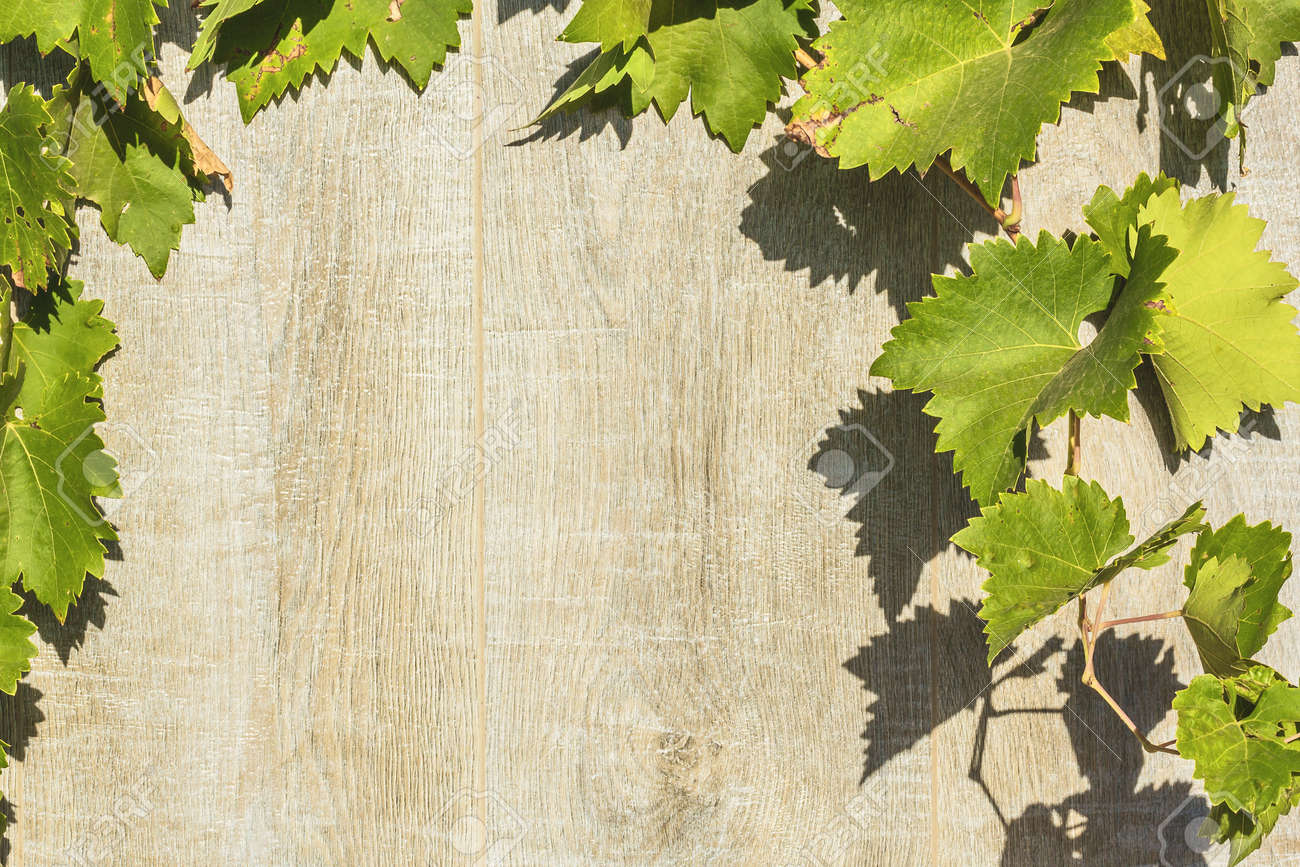 Texture Whitewashed Gray Wooden Planks And Grape Leaves Background Stock Photo Picture And Royalty Free Image Image 85945680