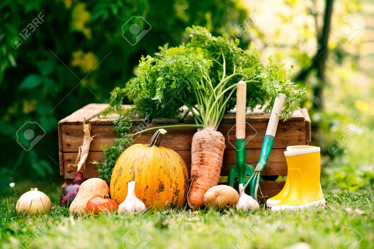 Vegetables Garden Tools And Wellies In The Garden Stock Photo