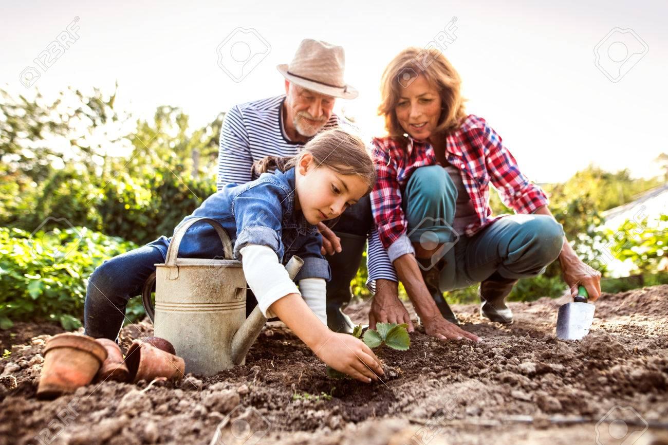 Senior couple with grandaughter gardening in the backyard garden - 88121621
