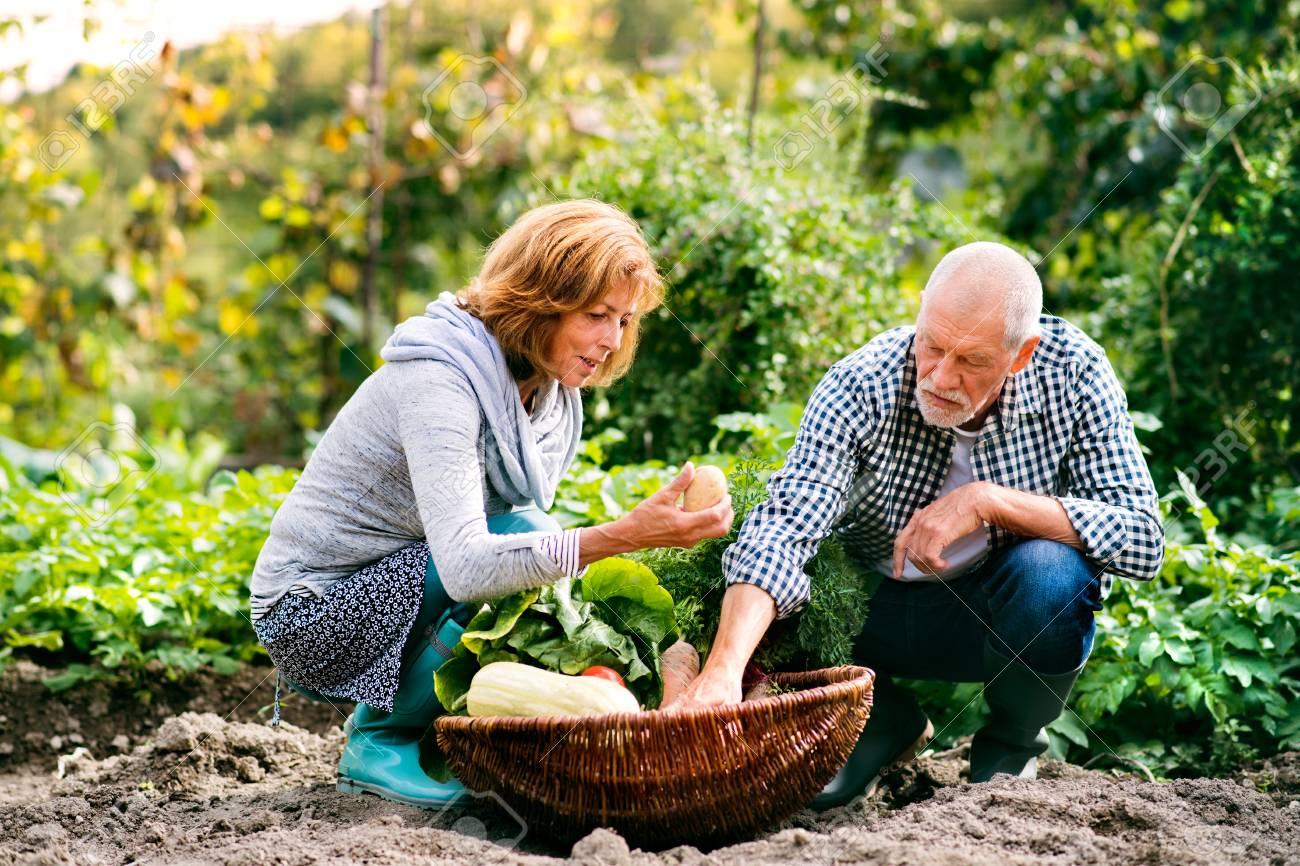 Gemeinsame Ltere Paare, Die Im Hinterhofgarten Im Garten Arbeiten #FX_98