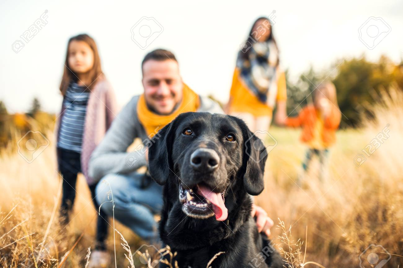 A young family with two small children and a dog on a meadow in autumn nature. - 112561503