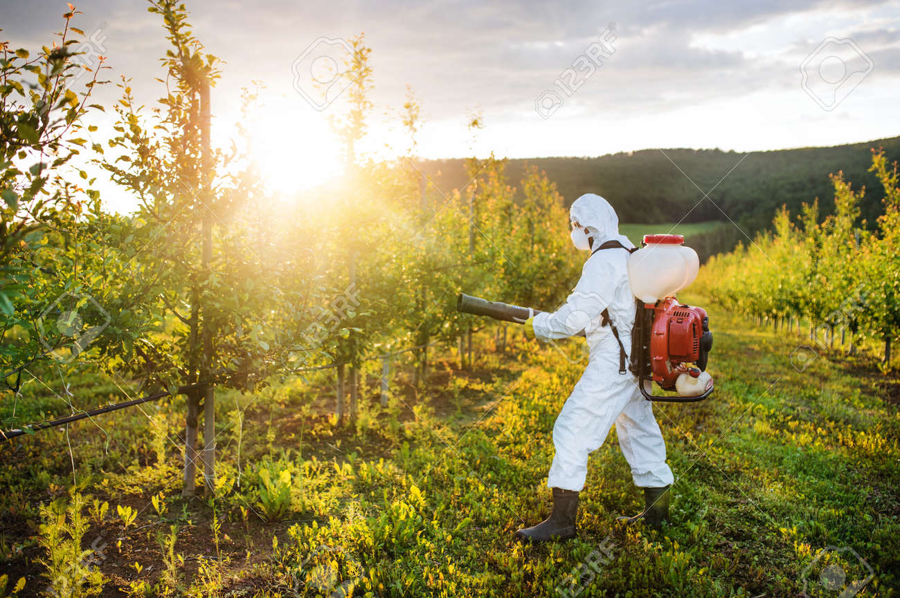 A farmer outdoors in orchard at sunset, using pesticide chemicals. - 131323641