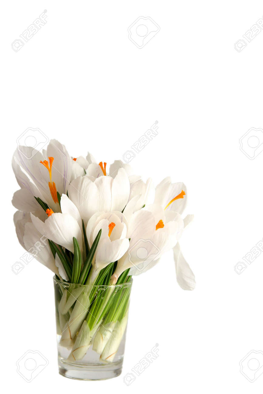 Beautiful white crocus on a white background Stock Photo - 764125