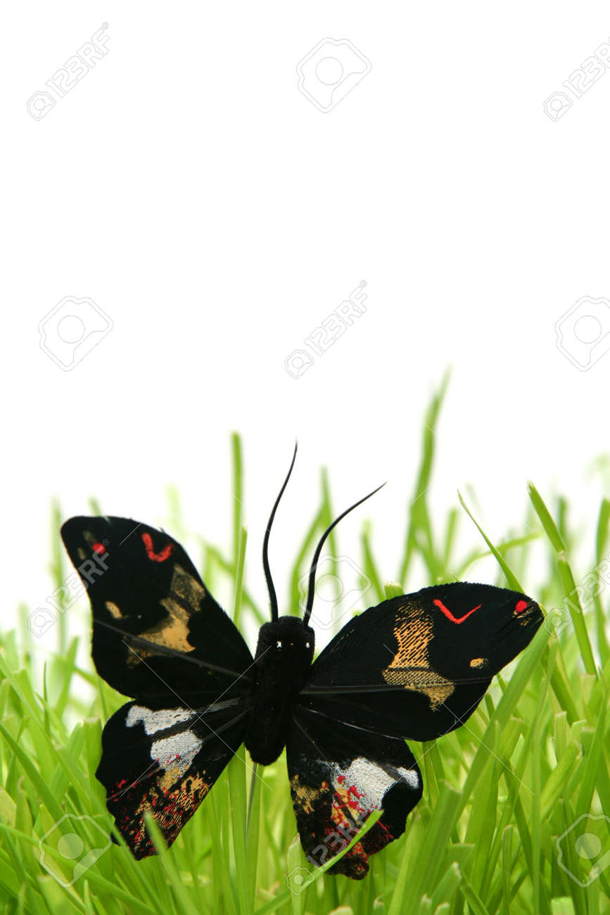 Black butterfly in the grass on a white background Stock Photo - 799813
