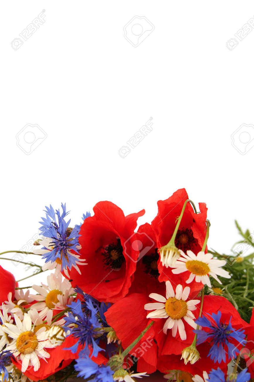 Poppies, cornflowers and chamomiles on a white background Stock Photo - 1223353
