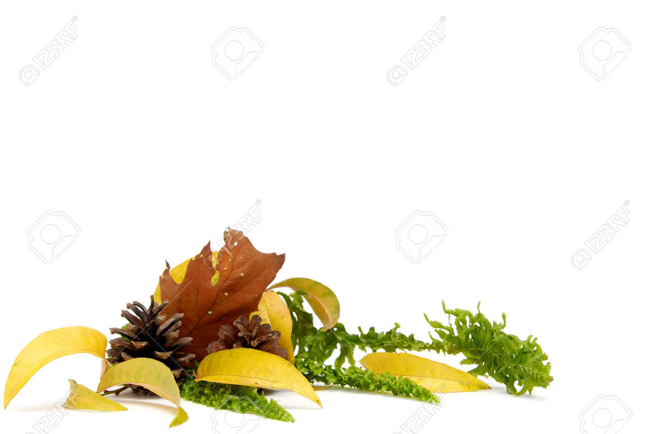 Colorful autumnal leaves on a white background Stock Photo - 1861935