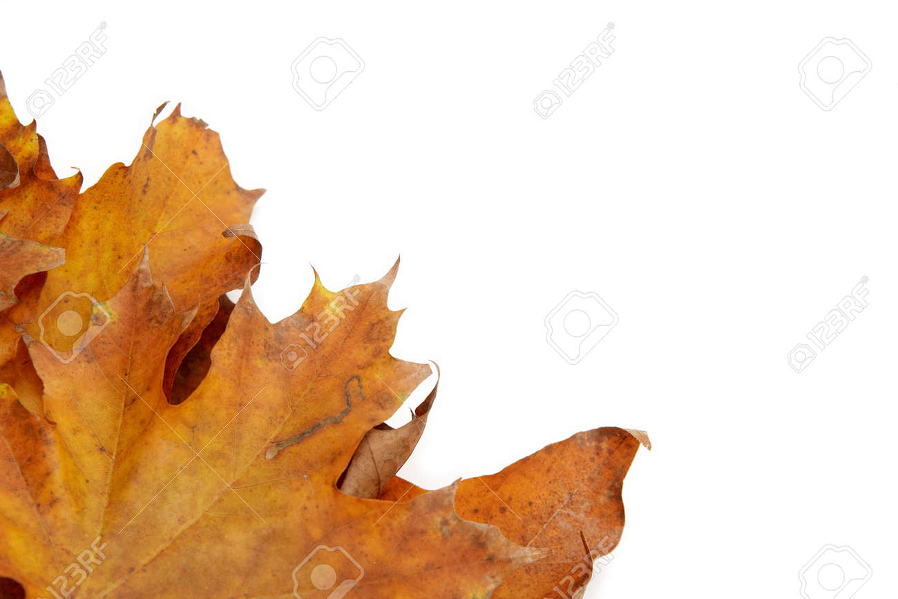 Colorful autumn leaves on a white background Stock Photo - 1998900