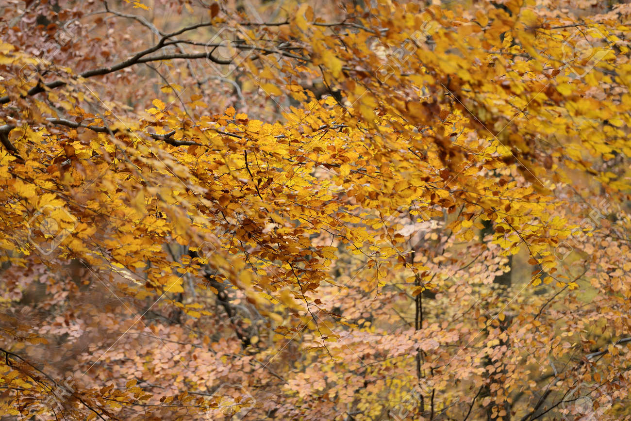autumnal colorful foliage  2, Baden detail of gorgeous foliage in colorful autumnal woods in  park in surroundings of the city of Stuttgart, Stock Photo - 17163810