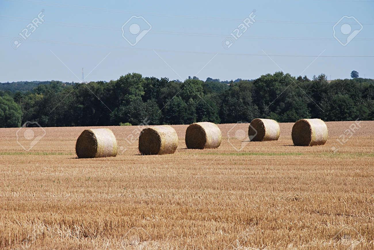Straw rolls. Stock Photo - 9321190