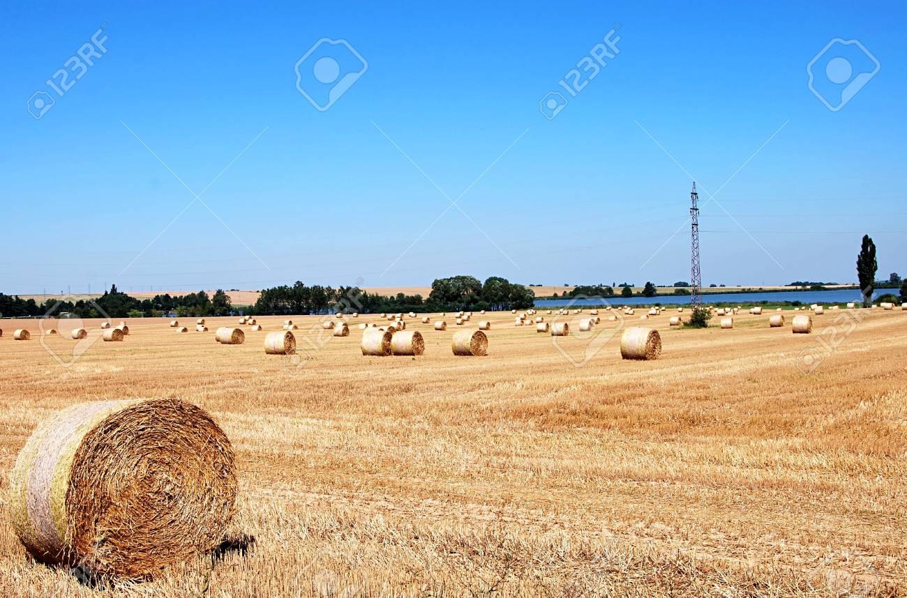 Summerground with many straw rolls. Stock Photo - 9321210