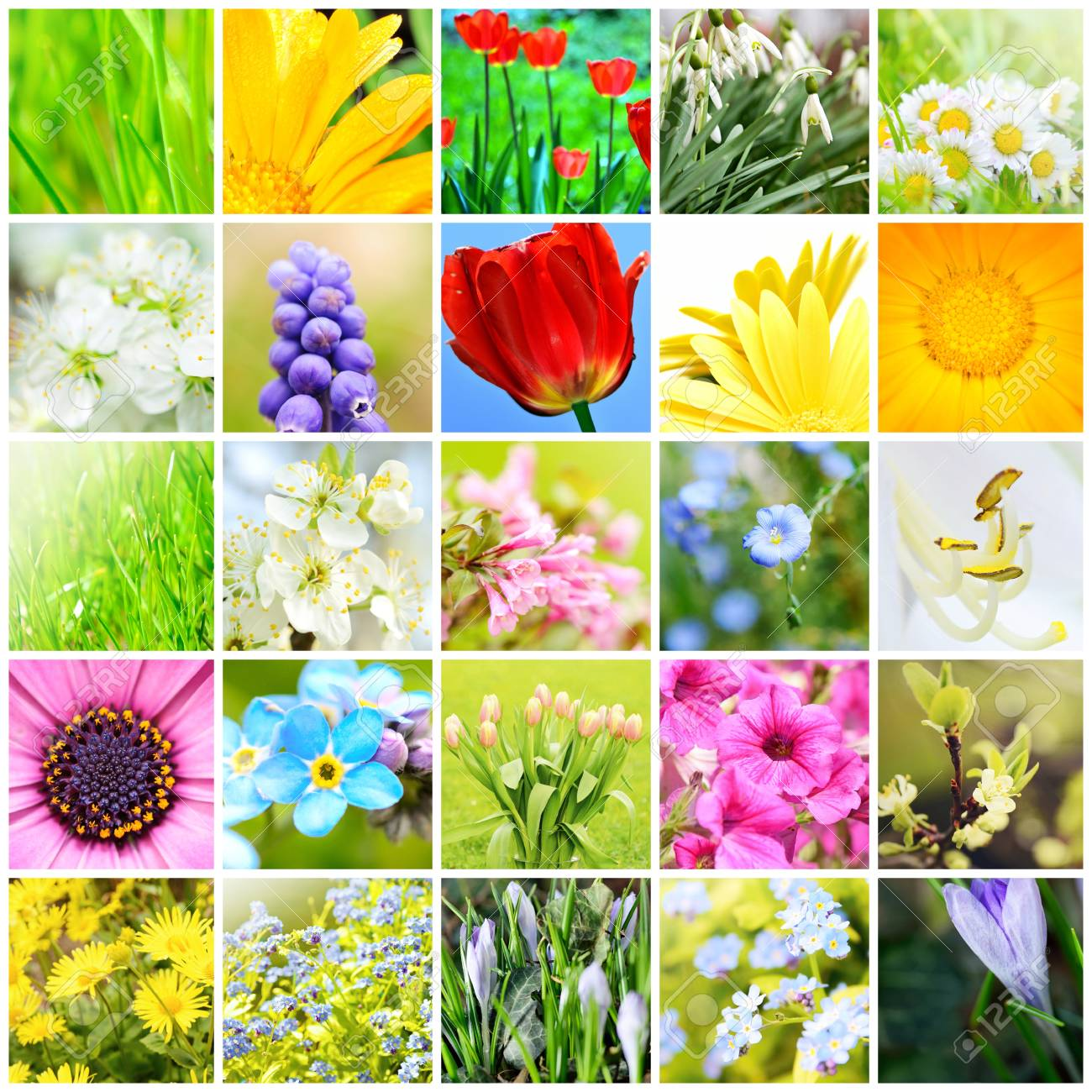 Spring Natural Abstract Collage With Plants And Flowers In Garden