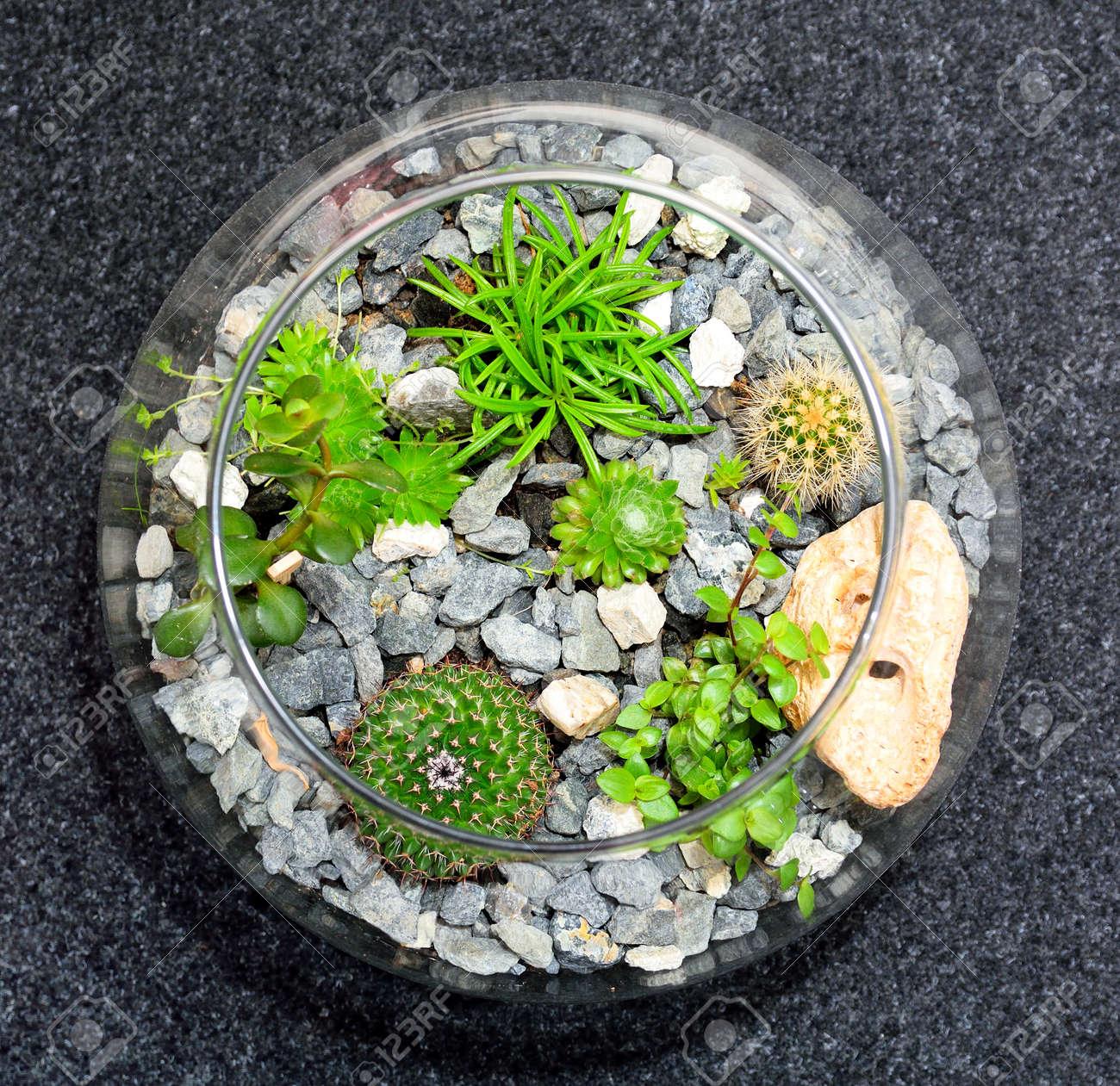 Plateau Interieur Jardin Miniature Decoratif Bulle De Verre Clair