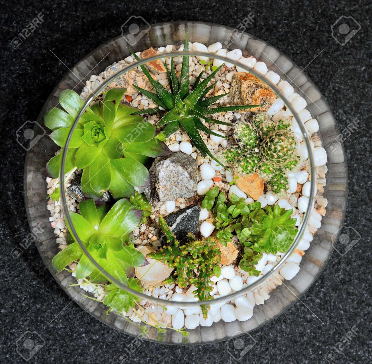 サボテンと多肉植物の透明なガラスのバブルでテーブル トップの屋内装飾