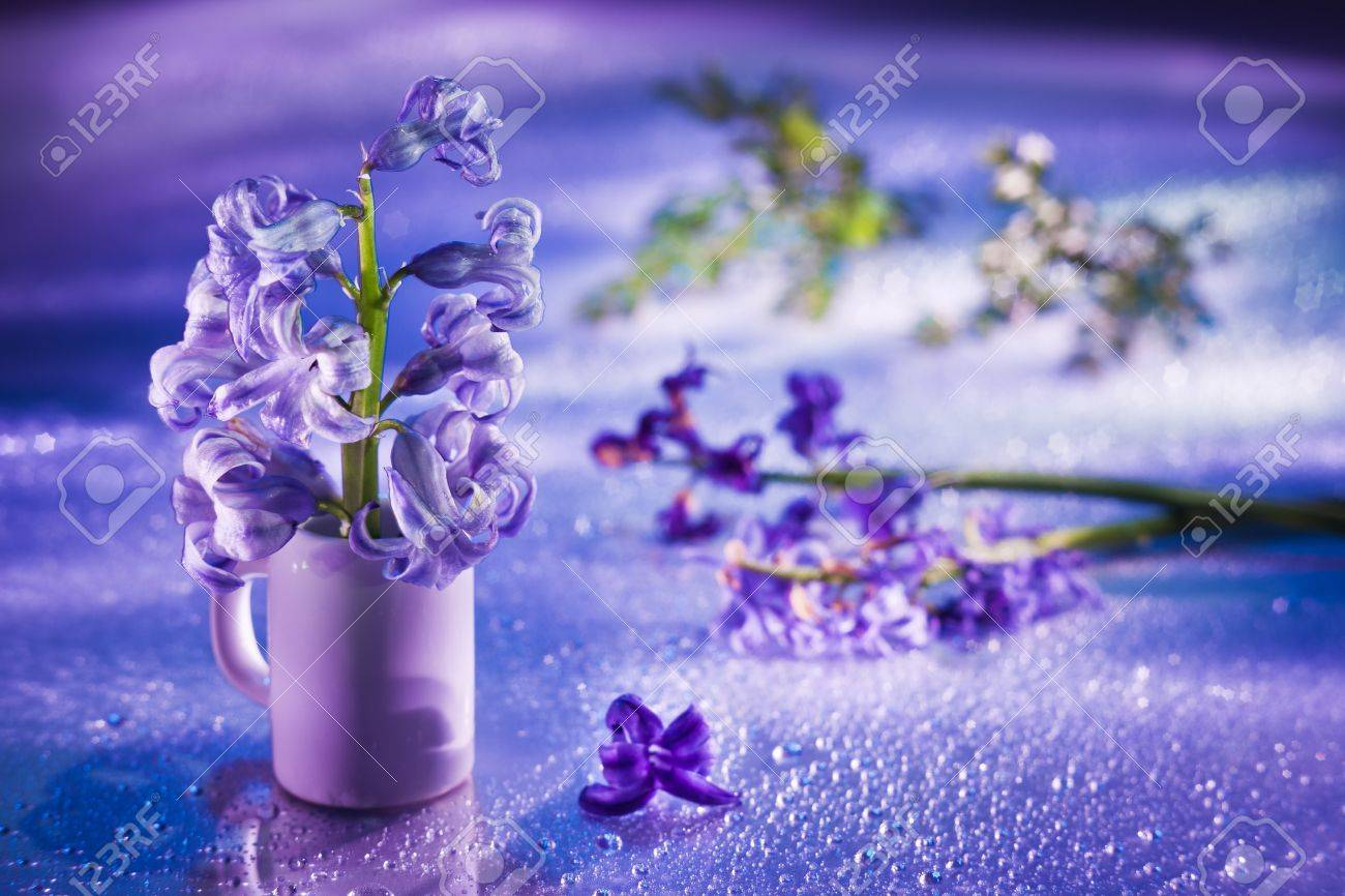 Still life with hyacinth flower in gentle violet colors and magic bokeh Stock Photo - 9295794