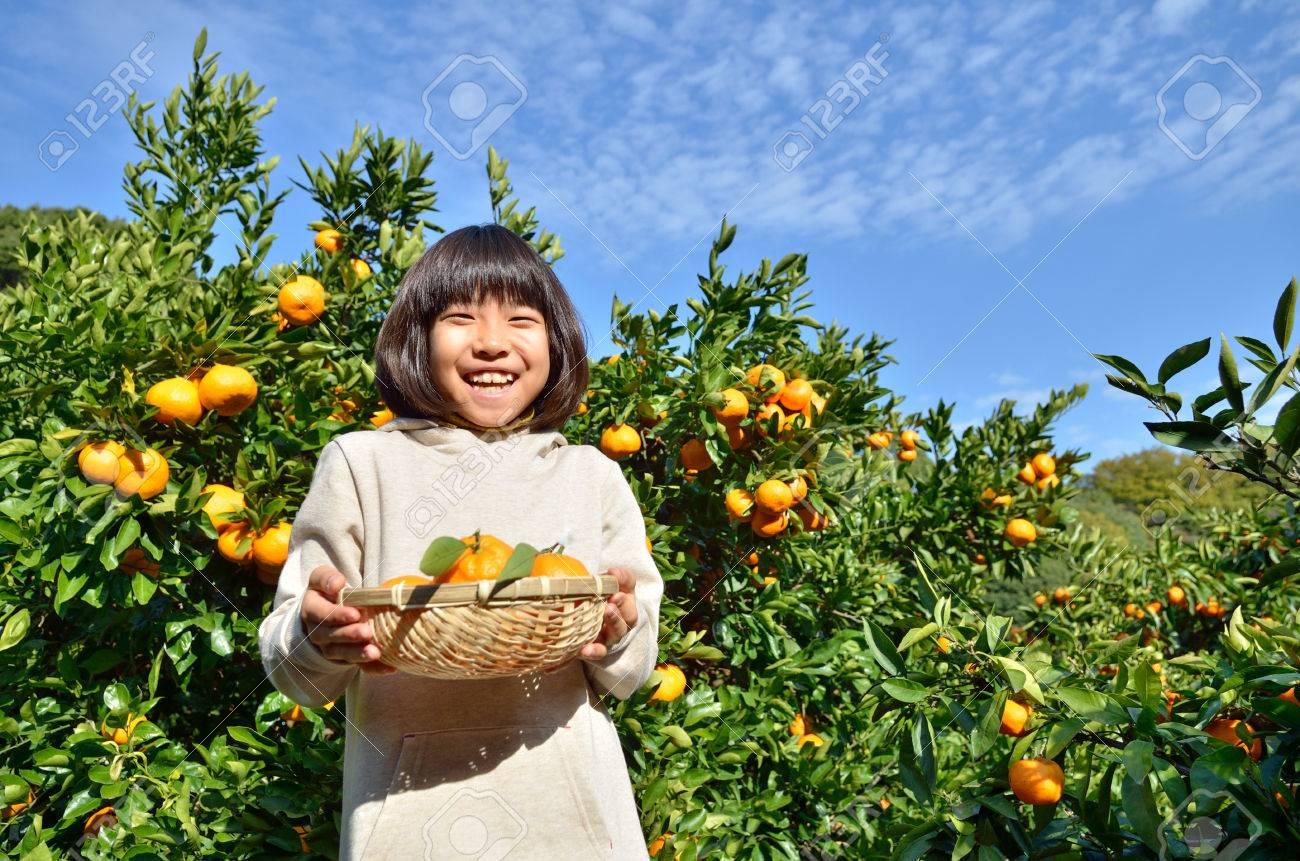 Girls enjoy picking oranges - 52179424
