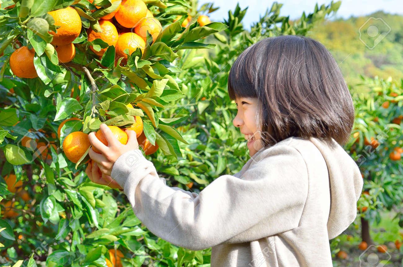 Girls enjoy picking oranges - 57094828