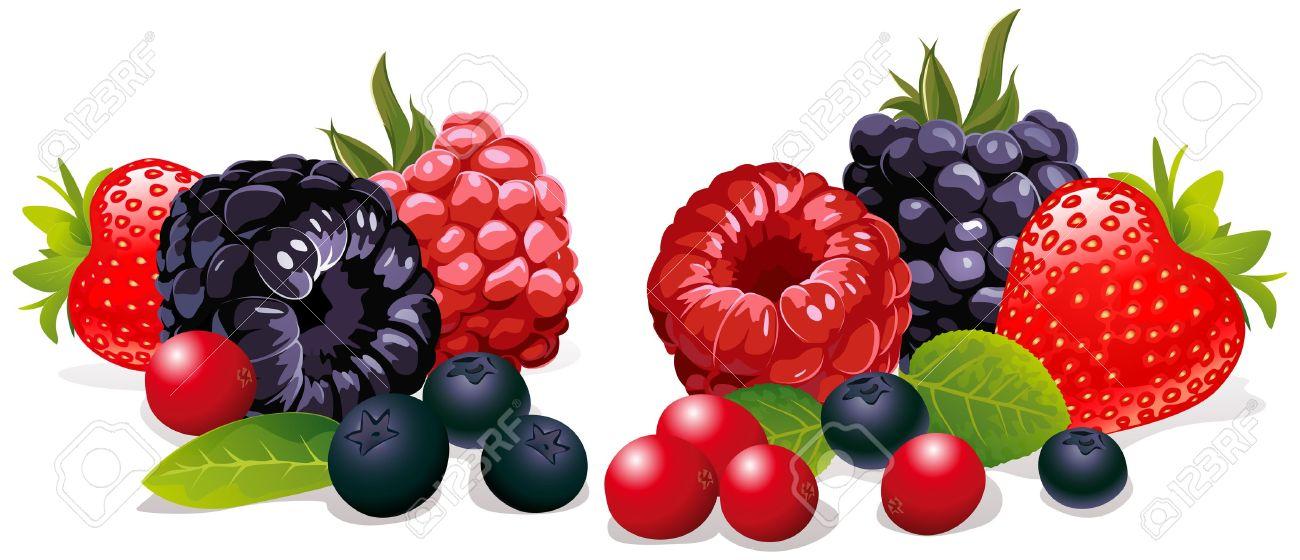berries isolated Stock Vector - 10866444