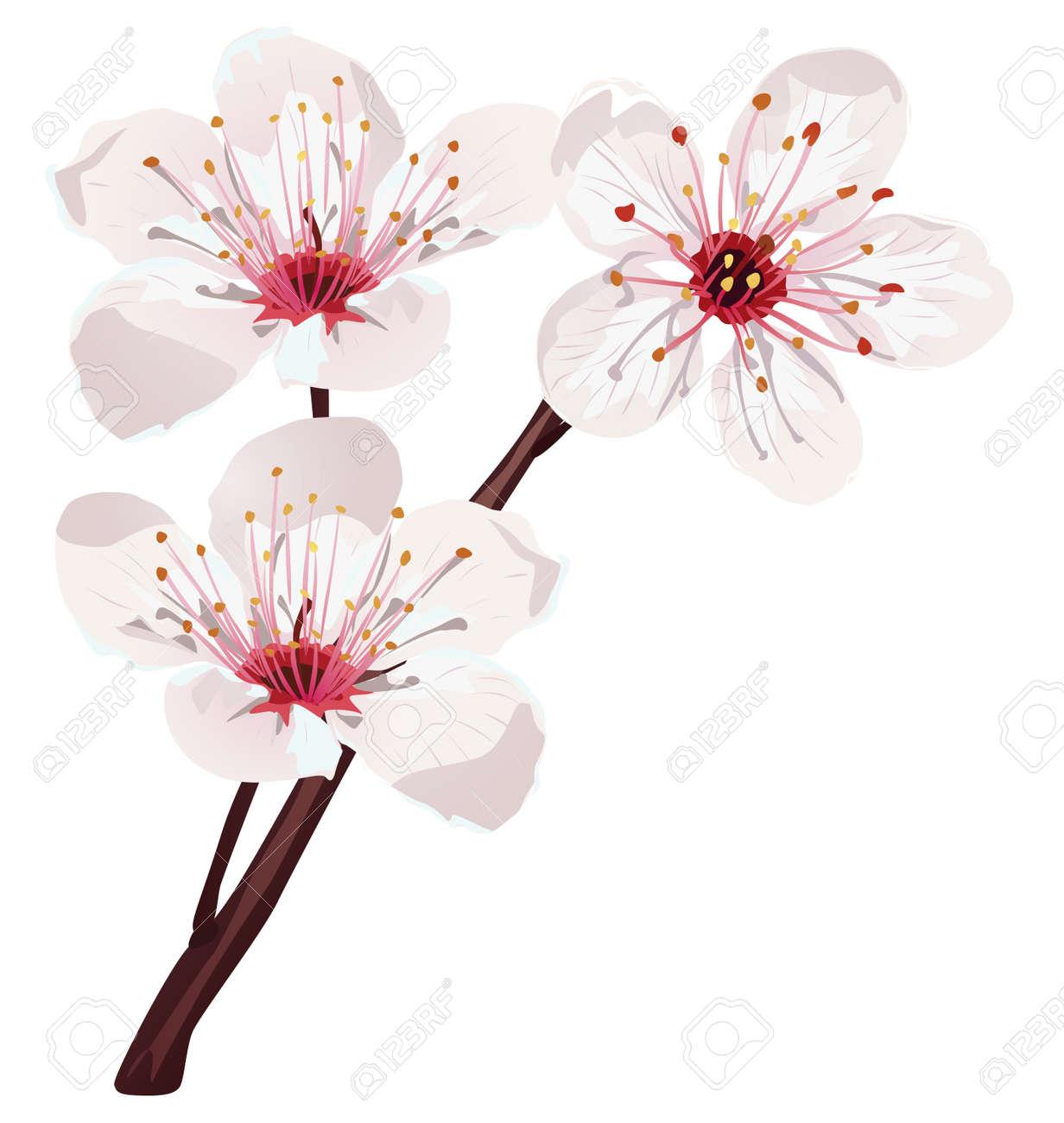 cherry blossom - 15017302