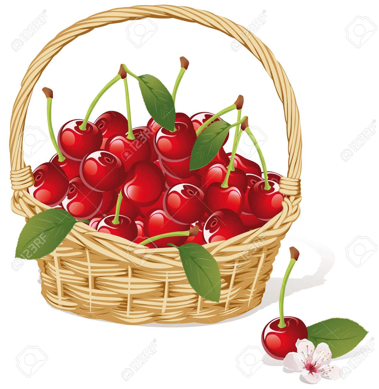 cherry basket Stock Vector - 15094535