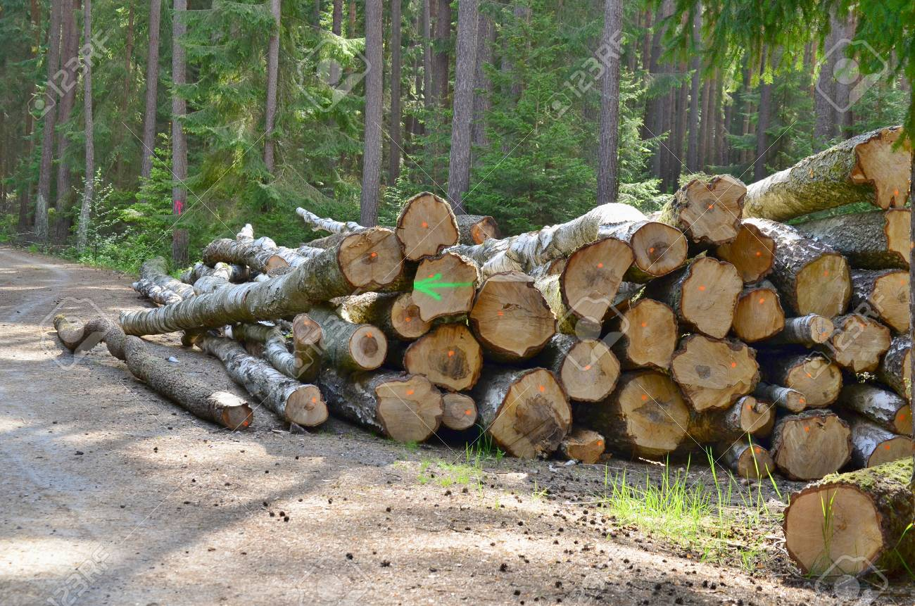 timber ready for transport, South Bohemia, Czech Republic Stock Photo - 79084709
