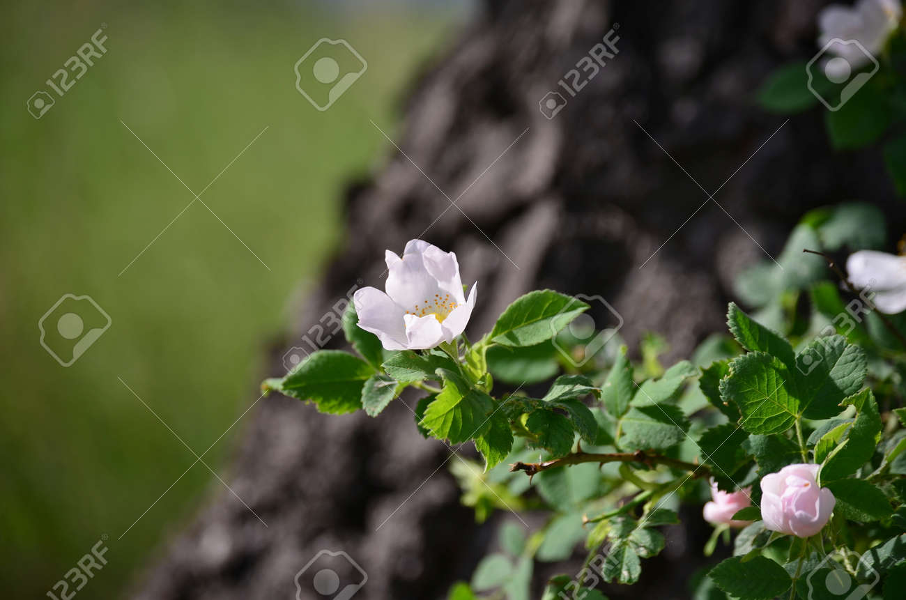 Blooming Spring Flowers South Bohemia Czech Republic Stock Photo